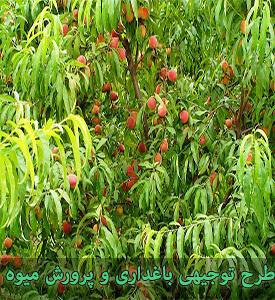 طرح توجیهی باغداری و پرورش میوه