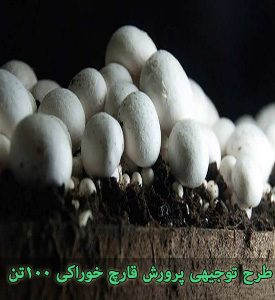 پرورش قارچ خوراکی با ظرفیت 100 تن