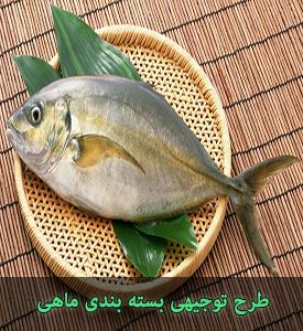 طرح توجیهی بسته بندی ماهی با ظرفیت 1800 تن در سال