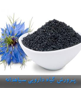 پرورش گیاه دارویی سیاهدانه