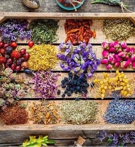 طرح توجیهی تولید ارگانیک گیاهان دارویی